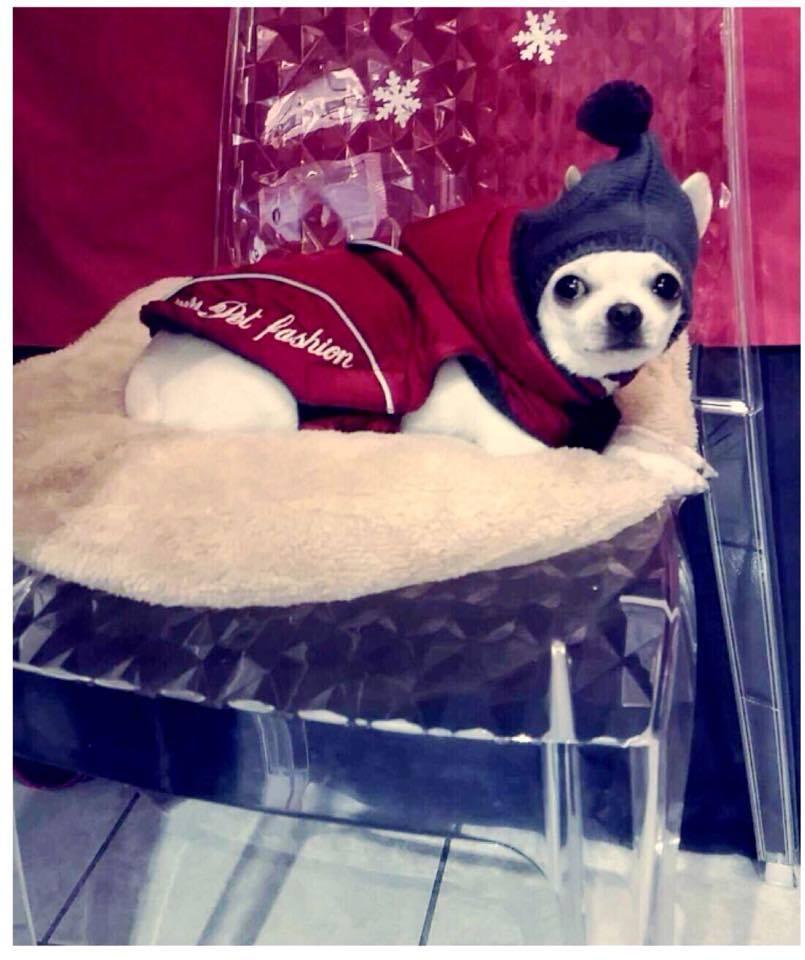 doudoune-et-bonnet-pour-chien