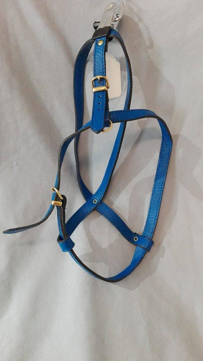 harnais cuir bleu